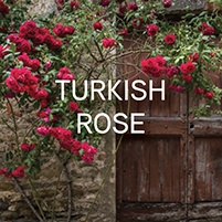 TURKISH-ROSE
